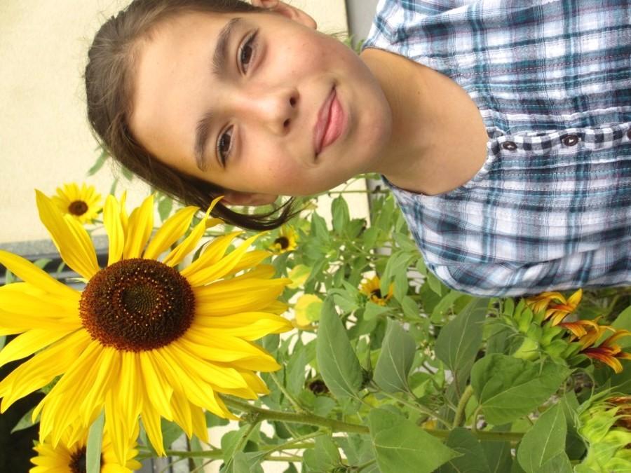 Sonnenblumenaktion